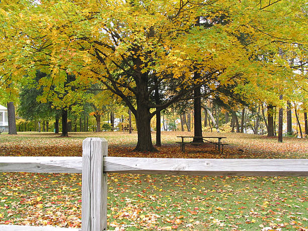 Fence and Tree in Fall Colors stock photo