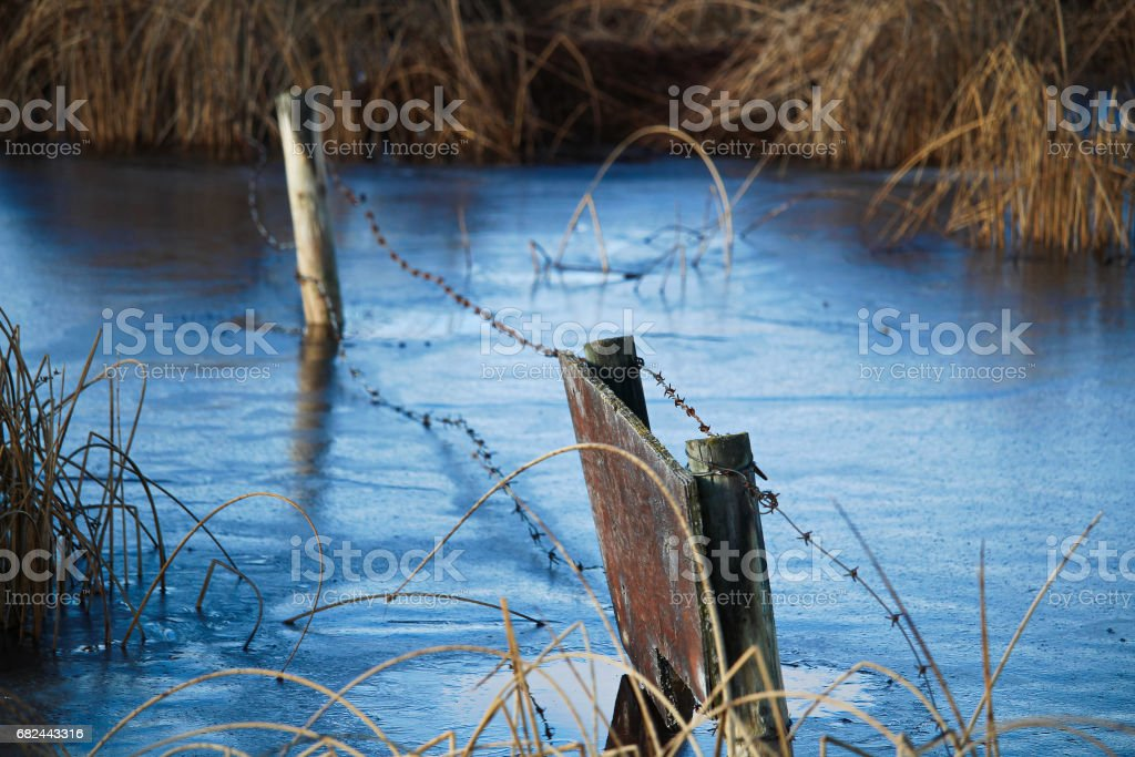 A fence frozen in ice along some rushes royalty-free stock photo