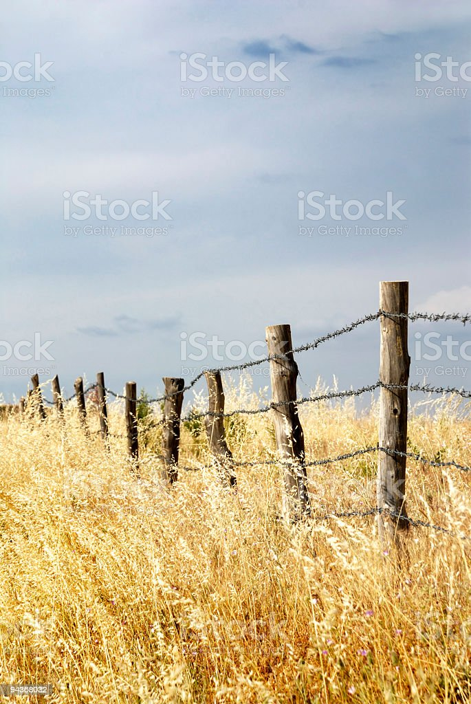 Fence in Meadow stock photo