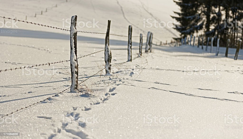 Fence in Snow royalty-free stock photo