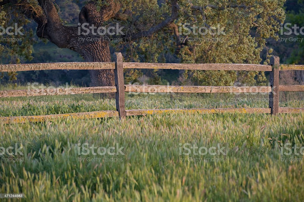 Fence in Sunset stock photo