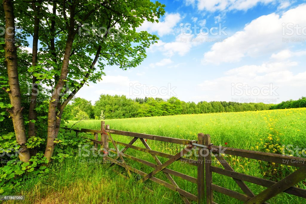 Fence in the green field under blue sky royalty-free stock photo