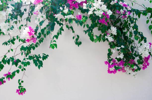 Zaun aus frischen Blumen auf der Straße – Foto