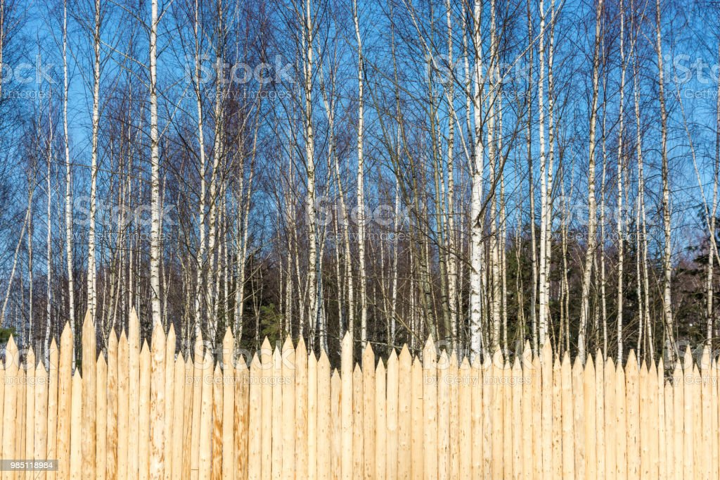 A fence of pointed logs on the background of birch forest. стоковое фото