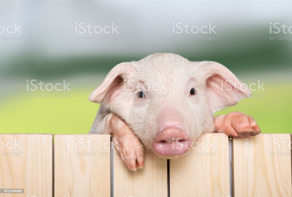 Fence. stock photo