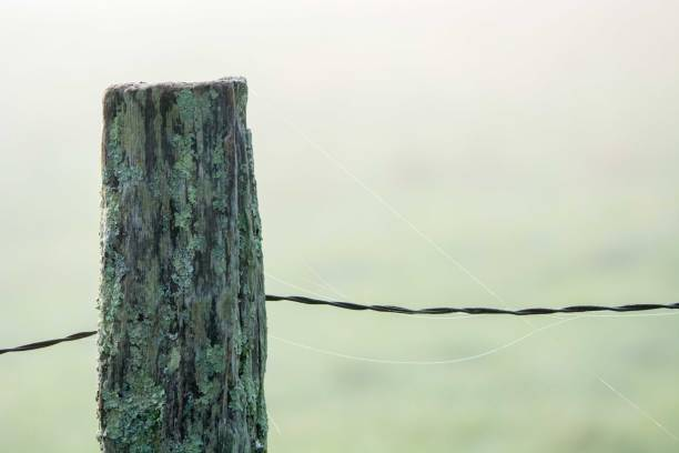 A fence post in heavy fog stock photo