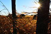 istock Fence Post Silhouette 1057784642