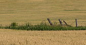 istock Fence Posts dividing Wheat Fields 1220656103