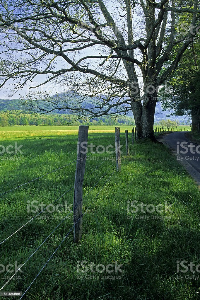 Fence, Tree, Road, Cades Cove, Great Smoky Mtns stock photo