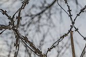 istock Fence with barbed wire against the sky and branches 1135993391