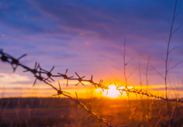 Fence with barbed wire on the background of the bright sunset stock photo