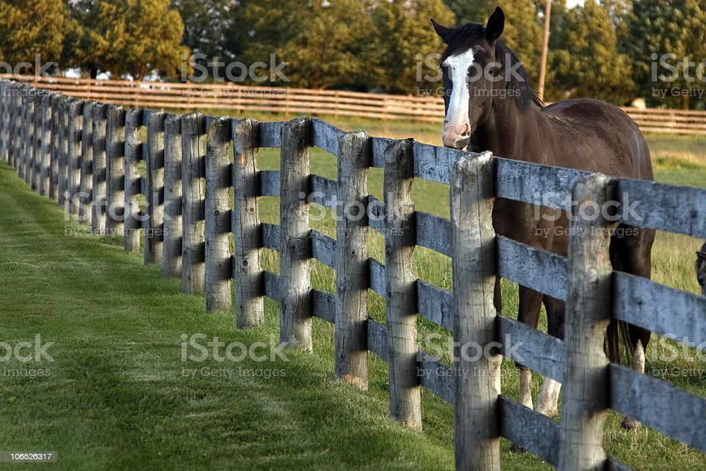 Fenced in horse royalty-free stock photo