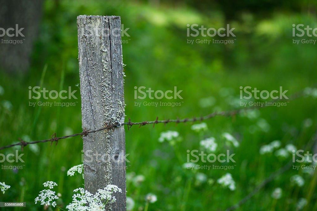 Fenced Pasture bildbanksfoto
