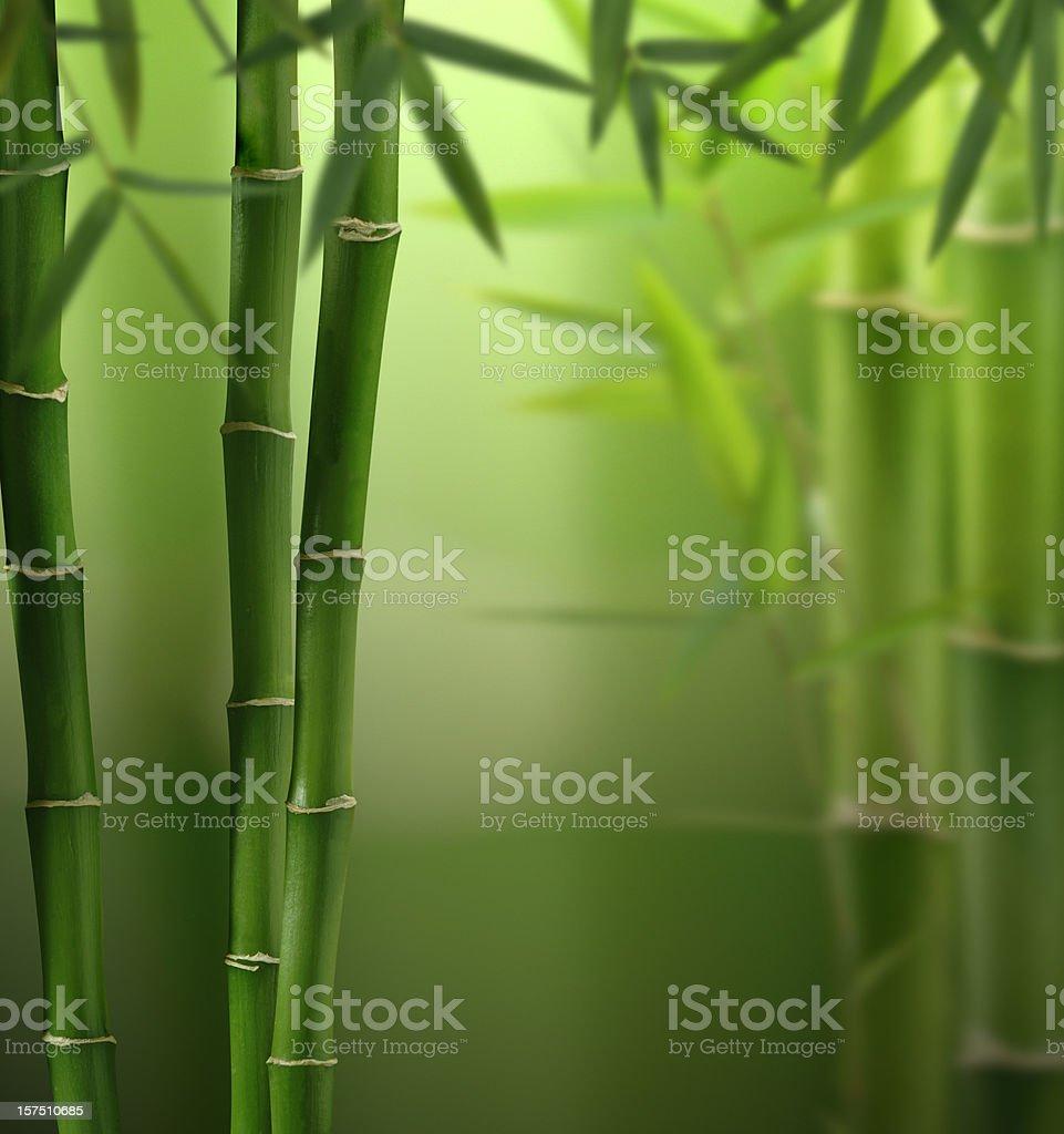 Feng-Shui Jungle stock photo