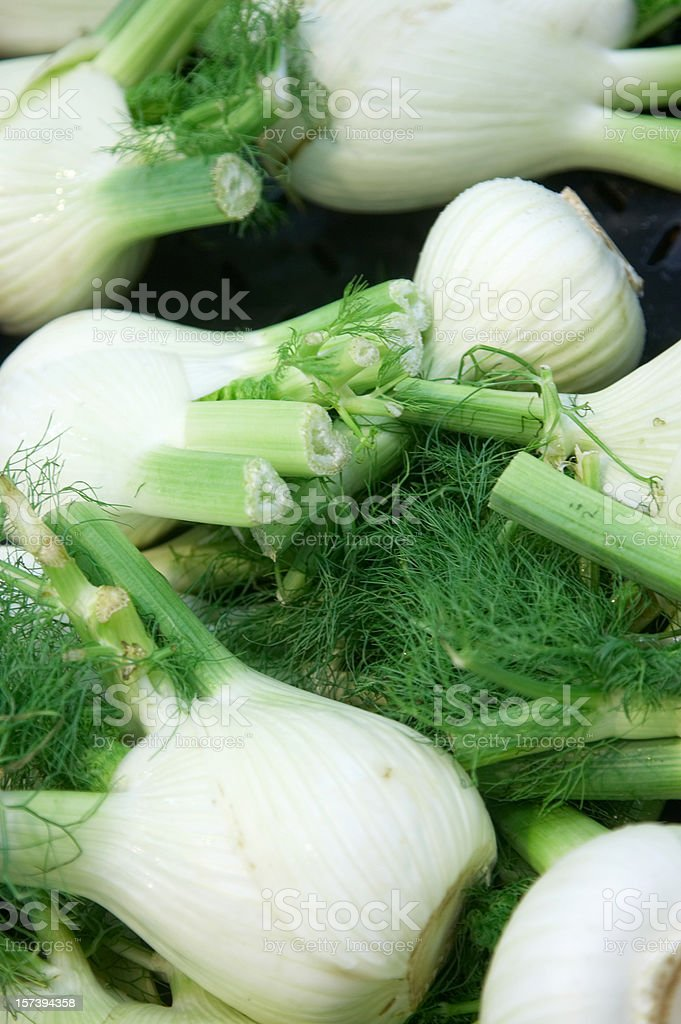 Fennel bulbs close in royalty-free stock photo