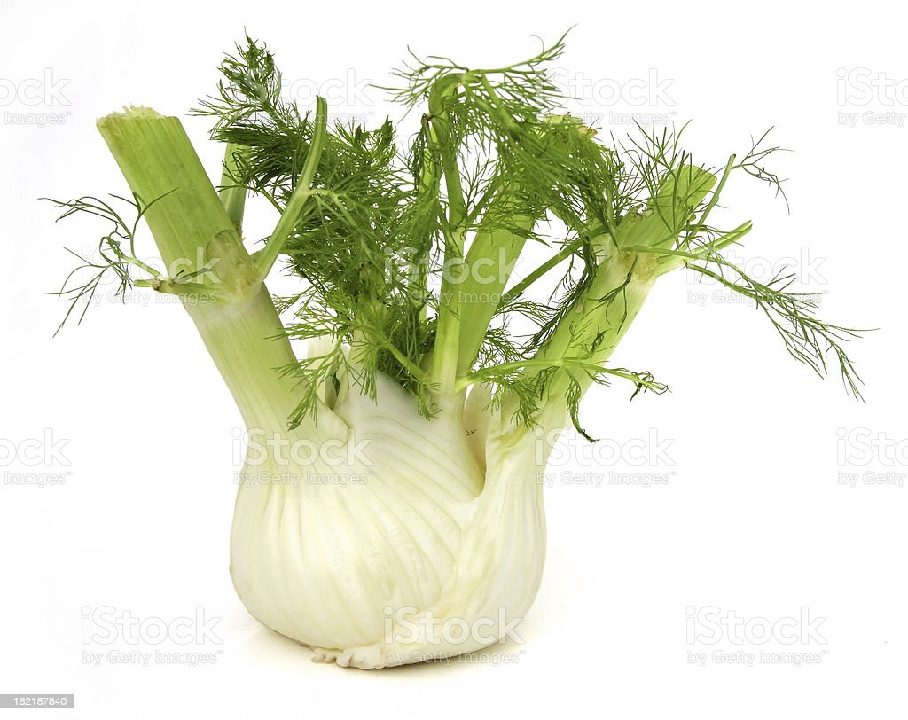 Fennel Isolated on White royalty-free stock photo