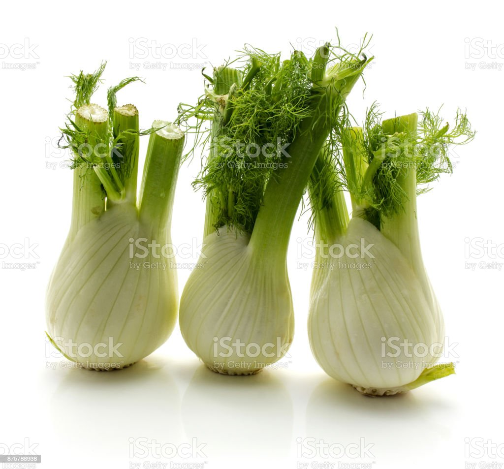 Fennel isolated stock photo