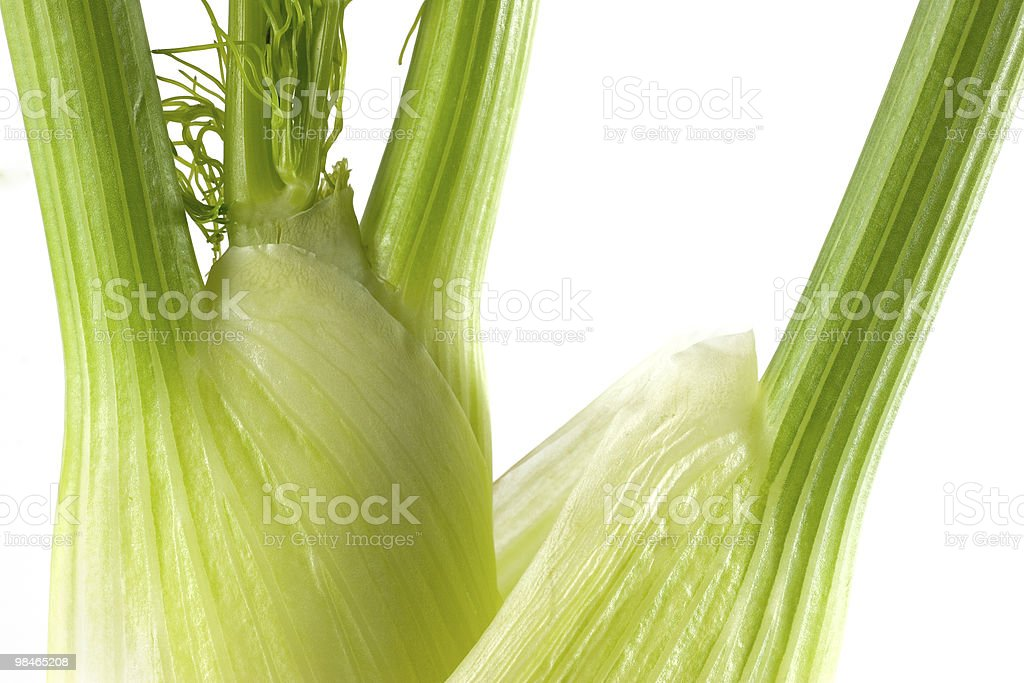 Fennel Isolated royalty-free stock photo