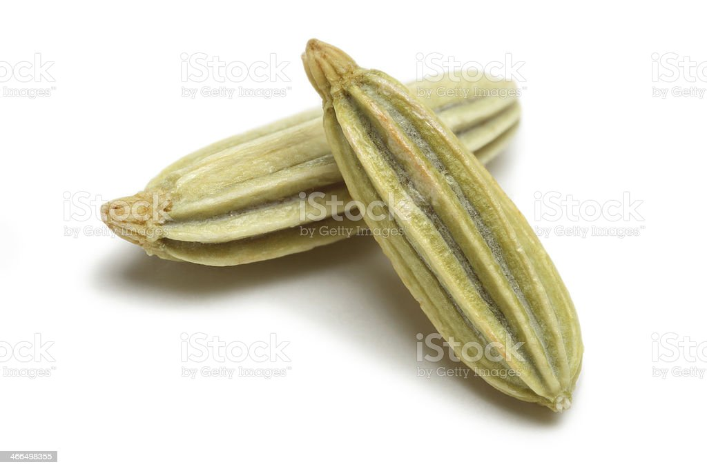 Fennel stock photo