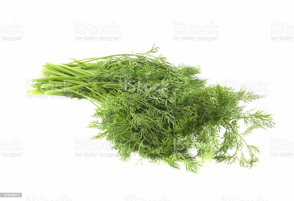 Fennel. royalty-free stock photo