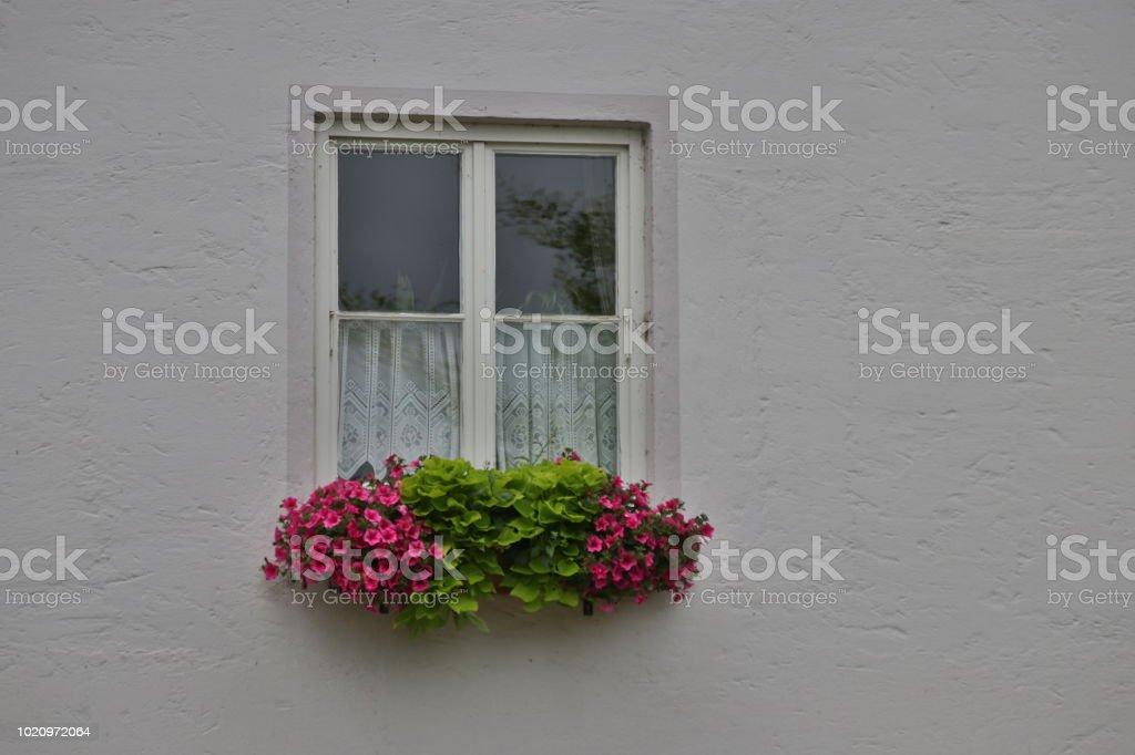 Fenster mit Blumen stock photo