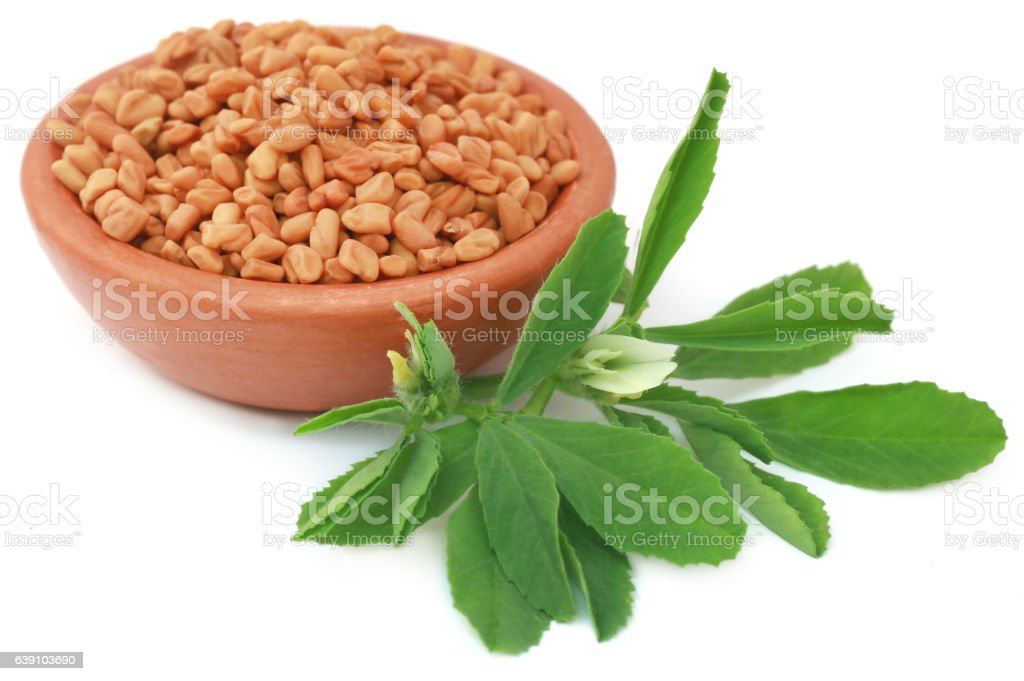 Fenugreek leaves with seeds stock photo