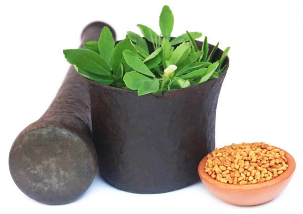 feuilles de fenugrec avec graines - fenugrec photos et images de collection