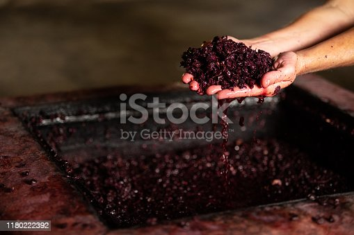 fermentation wine making in hands juice grappes