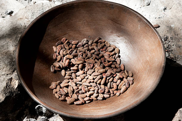 Fermented cocoa beans ready for old-fashion roasting stock photo