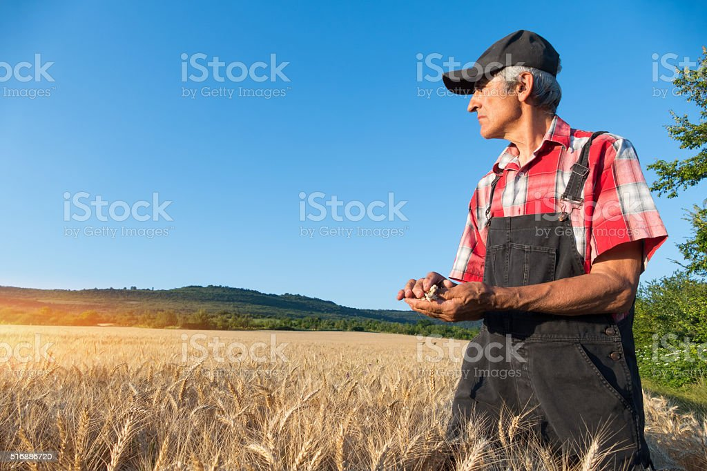Fermer with overall in his field stock photo