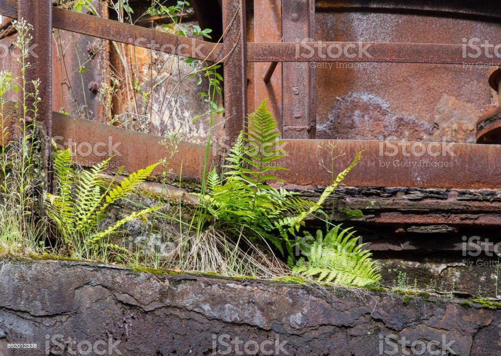 fern and rusty steel girders stock photo
