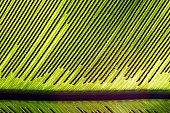 istock Fern and Spur (Bird's nest fern) 951176522