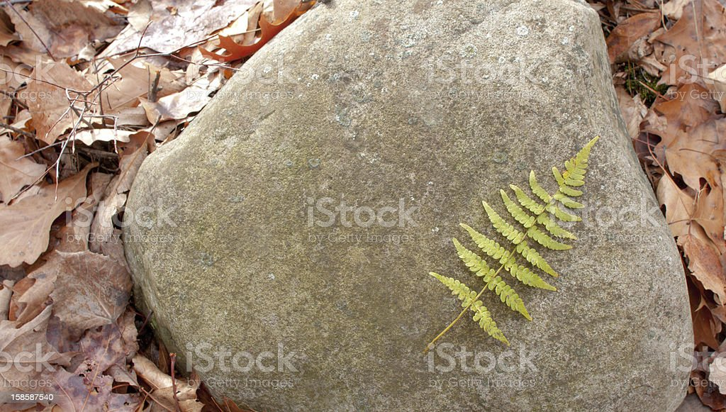 Fern And Stone stock photo