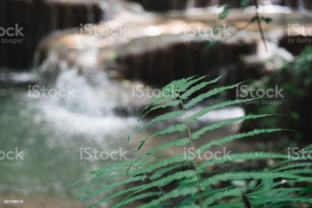 Fern and Waterfall at Erawan National Park, Thailand (focus on the fern) stock photo