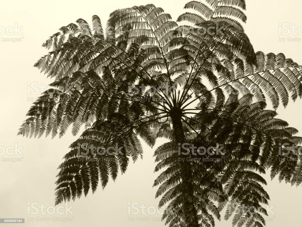 Fern arborescente stock photo