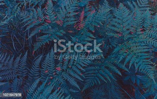 istock Fern Background 1021647976