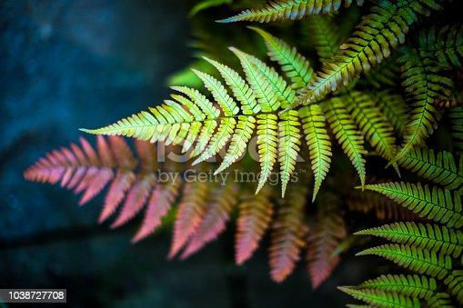 Overhead view depicting selective focus close up of colorful green and red fern leaves. Room for copy space.