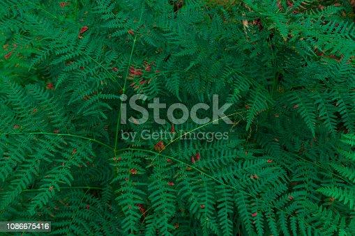 istock Fern Background 1086675416