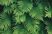 Full frame background with fresh green fern.