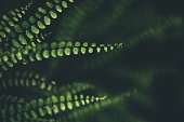 Fern Background