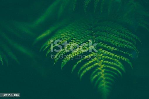 istock Fern Background 682292194