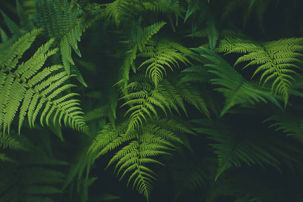 Fern Background Fern Background fern stock pictures, royalty-free photos & images