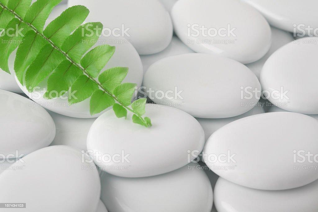 Fern Branch on White Stones royalty-free stock photo