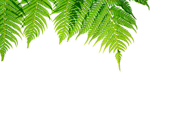 Fern branches hanging down. - Photo