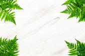 Tropical summer background on marble background
