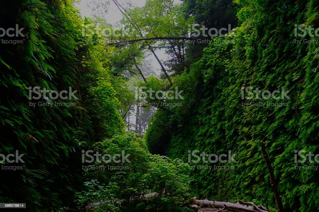 Fern Canyon Green stock photo