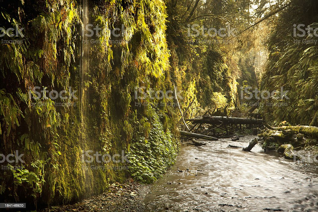 Fern Canyon in Redwood National Park stock photo