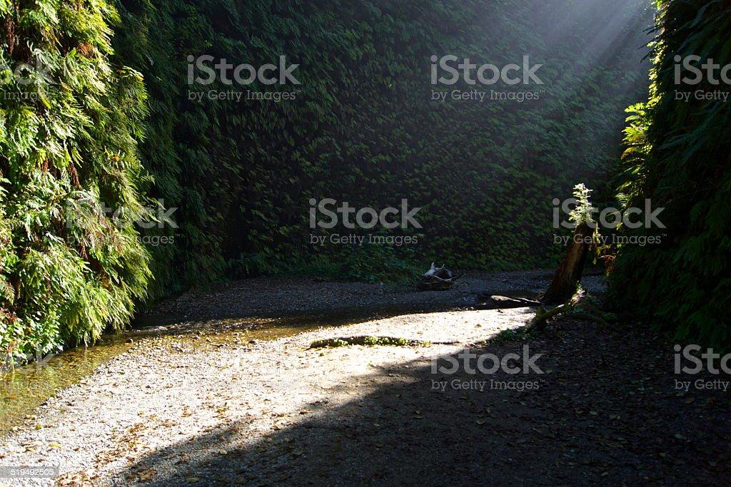 Fern Canyon Light Path stock photo