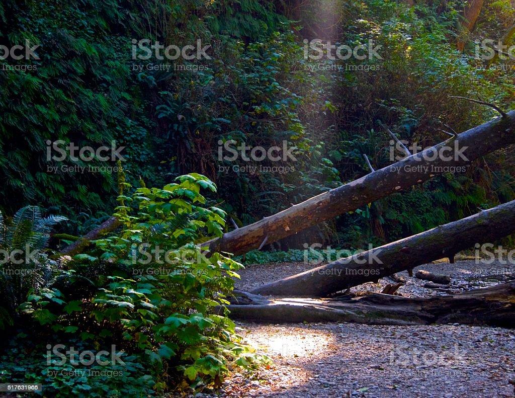 Fern Canyon Light stock photo