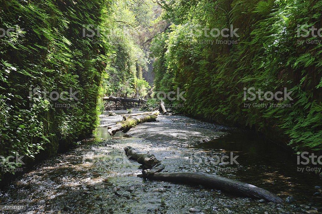 Fern Canyon stock photo